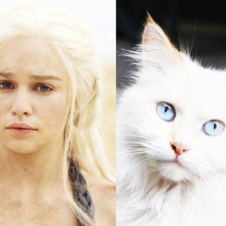 If the Game of Thrones cast were cute cats...