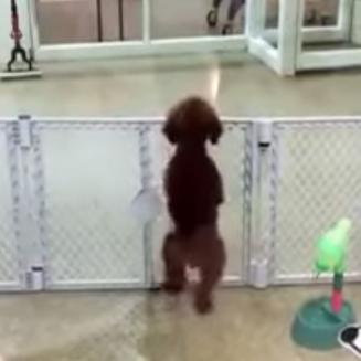 Dog is so excited to see it's owner it dances and jumps up and down
