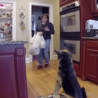 Guy scares mum with fake dog over and over again