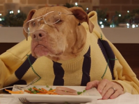 Dogs & a cat eating Christmas dinner with human hands