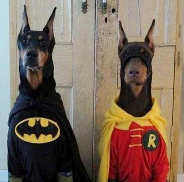 Awesome and hilarious Halloween costumes for dogs & The 11 Best Halloween Costumes for Dogs | smooth